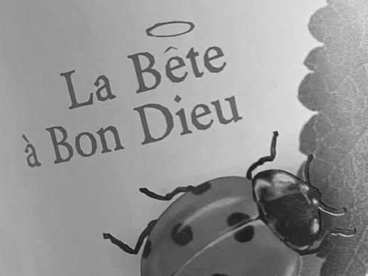 Sélection de vin rouge bio La Bê à Bon Dieu, cépage carignan, syrah, grenache